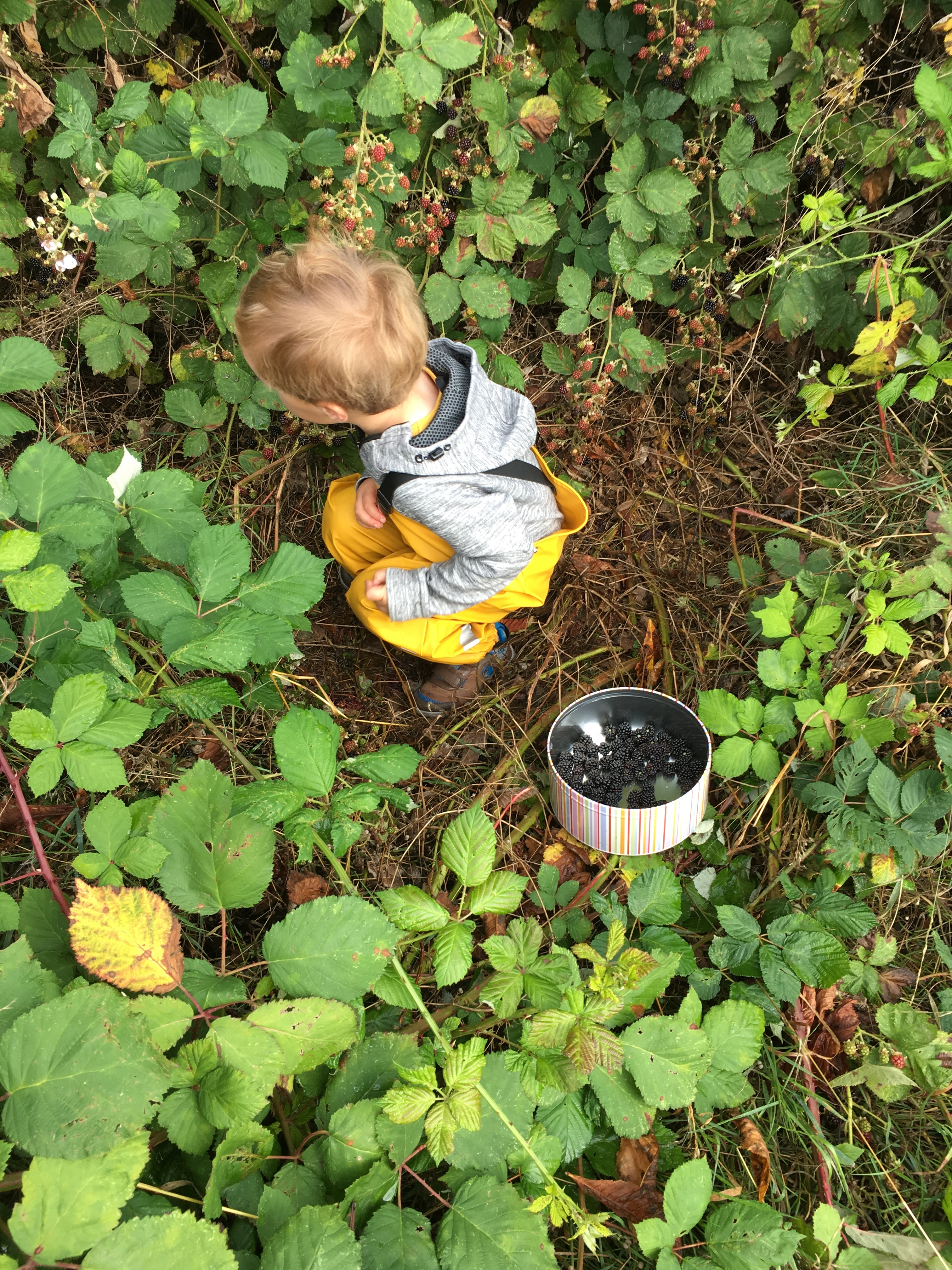 Child foraging