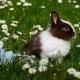 Easter Egg Trail Rabbit