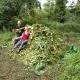 Volunteers removing Himalayan Balsam