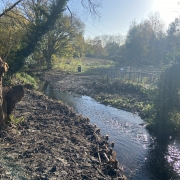 Planting by the River Ash
