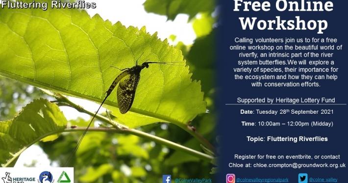Fluttering Riverflies - Online Workshop