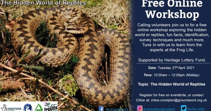 The Hidden World of Reptiles - Online Workshop