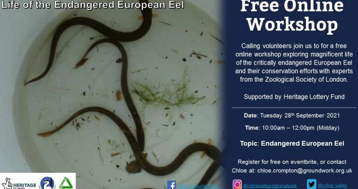 Life of the Endangered European Eel - Online Workshop
