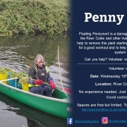 Floating Penny Wort Removal West Hyde